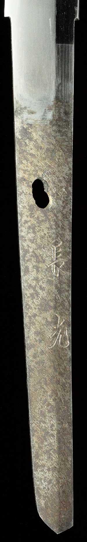 長光の茎写真